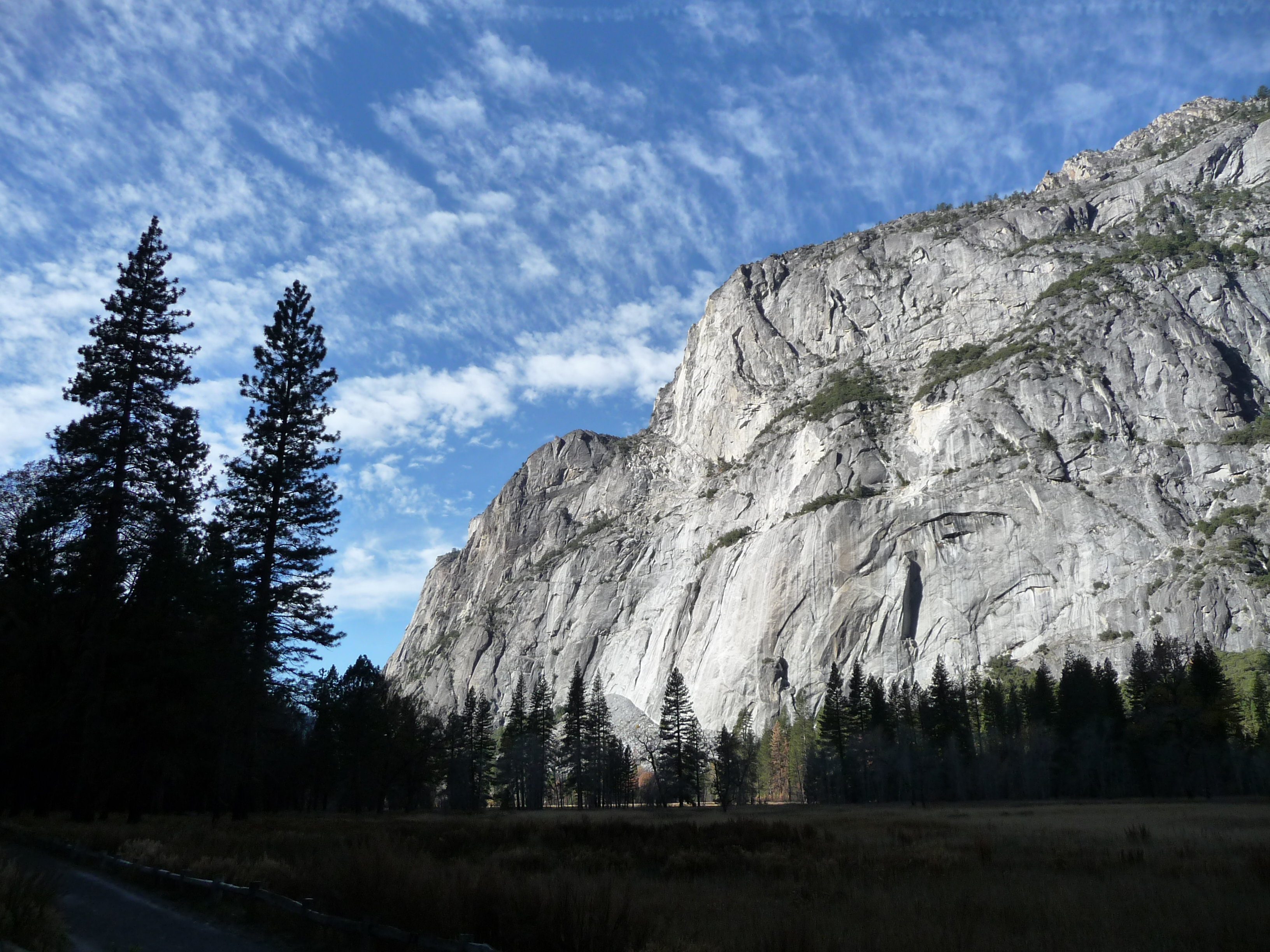 tree rock sky